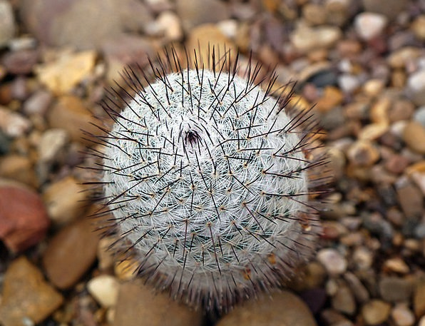 Cactus Landscapes Touchy Nature Thorn Prickle Pric