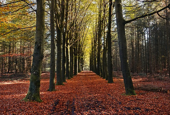 Forest Woodland Landscapes Fall Nature Trees Plant