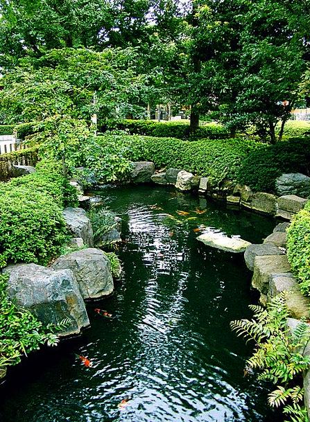 Japan Asakusa Tokyo Zen Koi Recovery Garden Asia F