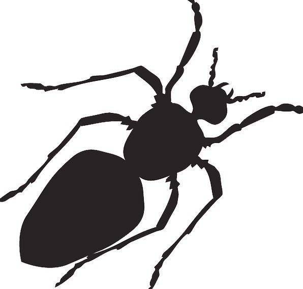 Black, Dark, Outline, Ant, Silhouette, Body, Form, Shape, Segmented