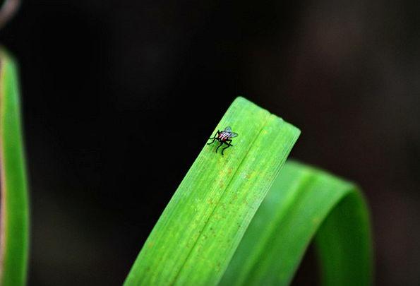Fly Hover Landscapes Vegetable Nature Close-Up Det