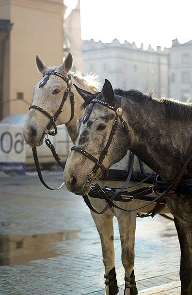 Animal Physical Mount Gray Leaden Horse White Snow