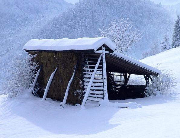 Winter Season Snowy Hayrack Rack White Snow Snowfl