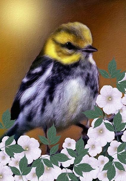Black-Throated Green Warbler Digital Painting Dend