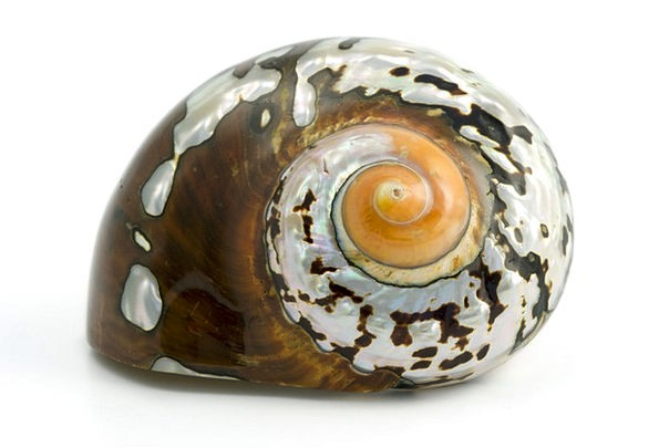 Animal Physical Ecology Sea Marine Biology Shell B