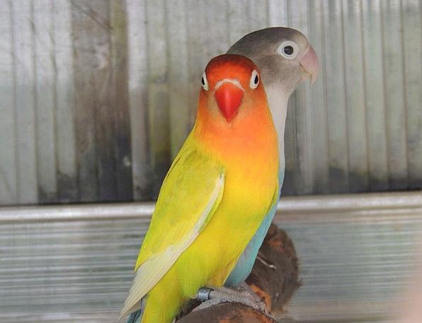 Parrots Imitators Imprisonment Bird Fowl Captivity
