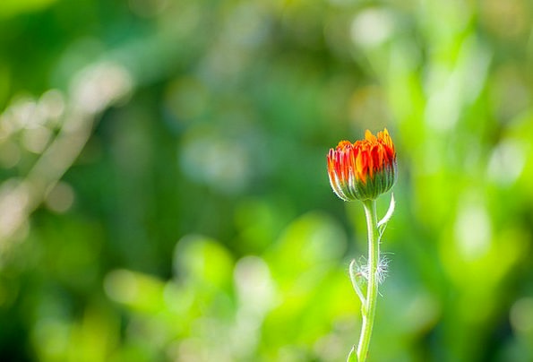 Flower Floret Landscapes Bloodshot Nature Green Li