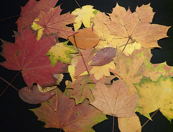 Fall Leaves Landscapes Busy Nature Tinker Fiddle P