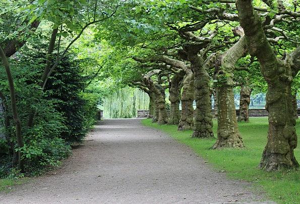Tree Sapling Landscapes Plants Nature Avenue Stree
