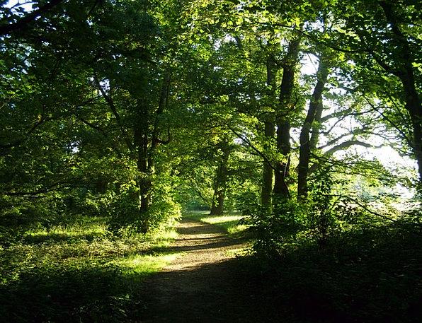 Forest Woodland Landscapes Trail Nature Landscape