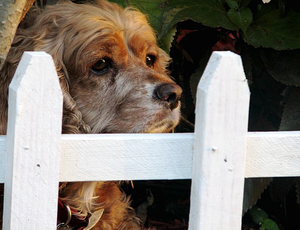 Dog Barrier Pet Domesticated Fence Animal Physical