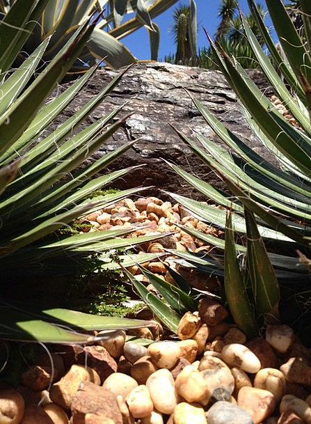 Cacti Landscapes Vegetable Nature Se Plant Green L