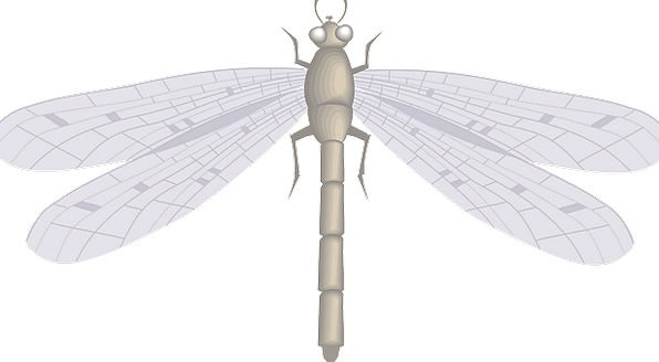 Dragon Hover Large Big Fly Wings Annexes Insect Fr