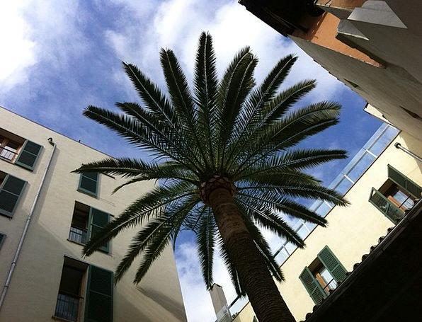 Palm Tribute Patio Majorca Courtyard Sun