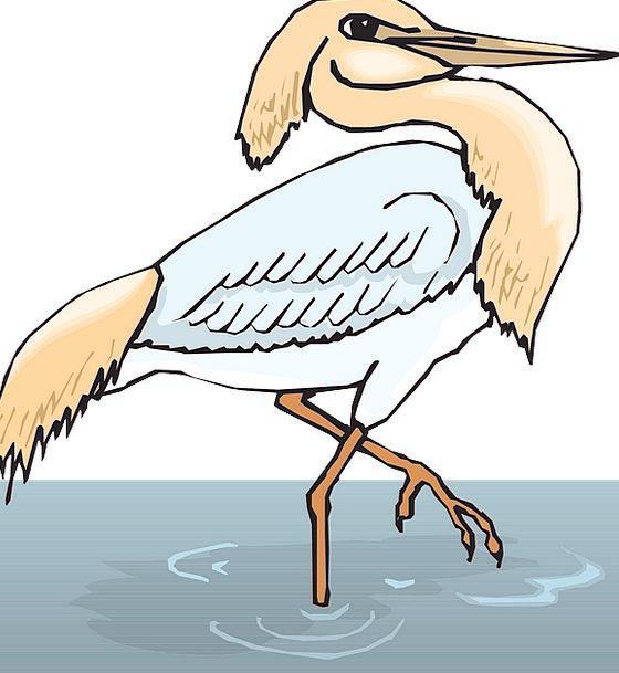 Water Aquatic Fowl Wings Annexes Bird One Unique F