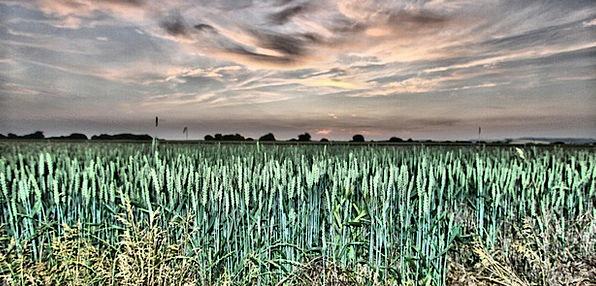 Field Arena Landscapes Harvest Nature Agriculture
