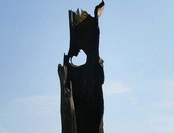 Oak Sky Watcher Hollow Stem Eye Judgment Sky Blue