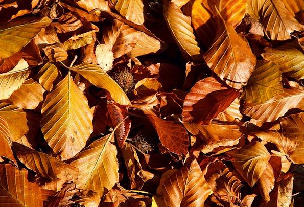 Autumn Textures Contextual Backgrounds Beech Backg