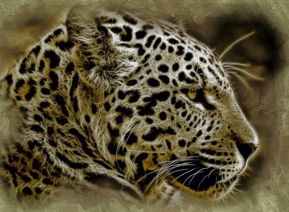 Jaguar Animal Physical Wild Cat Digital Mammal Cre