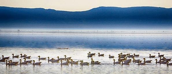 Geese Landscapes Prospect Nature Mist Haze Horizon
