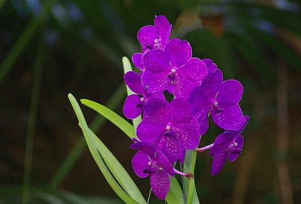 Orchid Landscapes Nature Inflorescence Wild Orchid