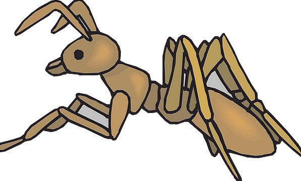 Ant Bug Brown Chocolate Insect Free Vector Graphic