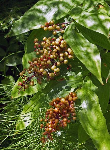 Berries Landscapes Woodland Nature Plant Vegetable