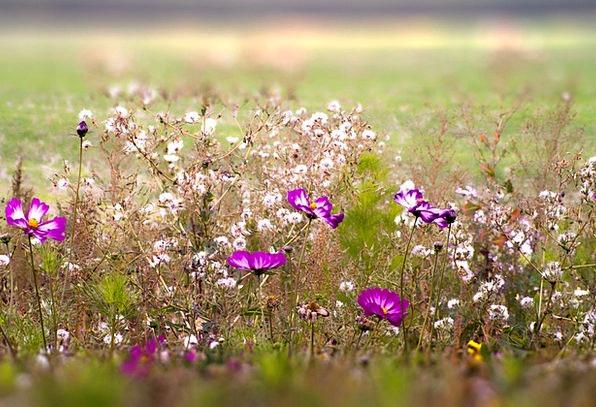 Fleurs Des Champs Plants Spring Coil Flowers Field