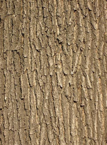 Oak Bark Textures Backgrounds Bark Bay Tree Bark S