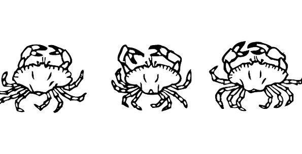 Crabs Shells Bullets Crustaceans Aquatic Seafood A