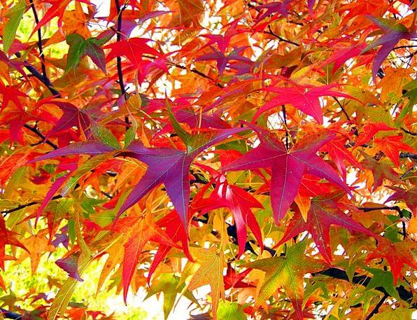 Leaves Greeneries Landscapes Reduction Nature Autu