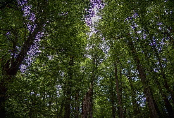 Forest Woodland Landscapes Plants Nature Nature Co