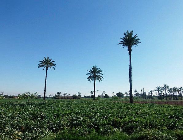 Palms Tributes Arena Elche Field