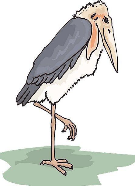 Bird Fowl Annexes Stork Wings Feathers Downs Adjut