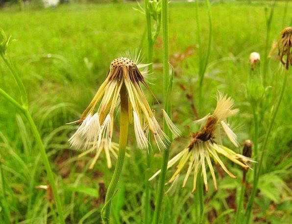 Floral Flowery Landscapes Vegetable Nature Natural
