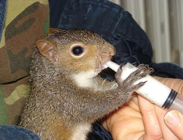 Squirrel Collector Landscapes Nourishing Nature Ba