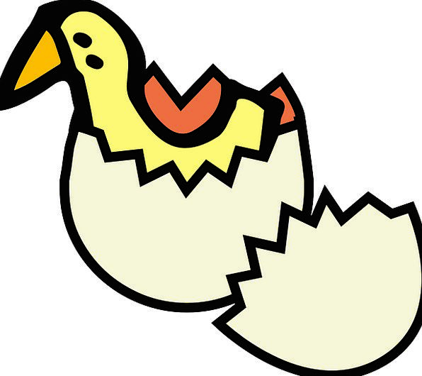 Hatching Shading Yellow Creamy Duckling Offspring