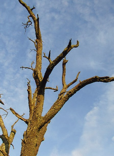 Tree Sapling Waldsterben Dead Tree Wood Timber Env