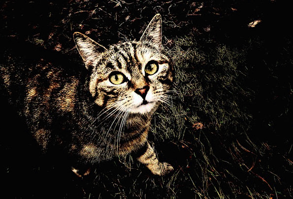 Cat Feline Contextual Animal Physical Background P