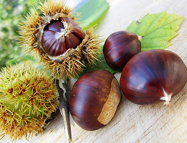 Chestnuts Anecdotes Drink Enthusiast Food Food Nou