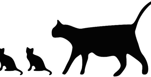 Cats Felines Outline Black Dark Silhouette Baby An