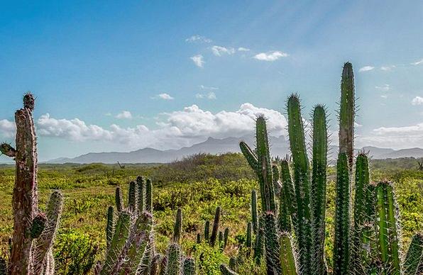 Venezuela Landscapes Scenery Nature Sky Blue Lands