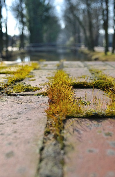 Paved Cemented Absent Moss Away Tufts Of Grass Fou