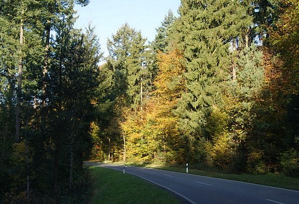 Autumn Fall Traffic Street Transportation Forest W