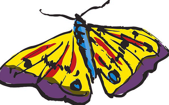 Butterfly Interesting Wings Annexes Colorful Still
