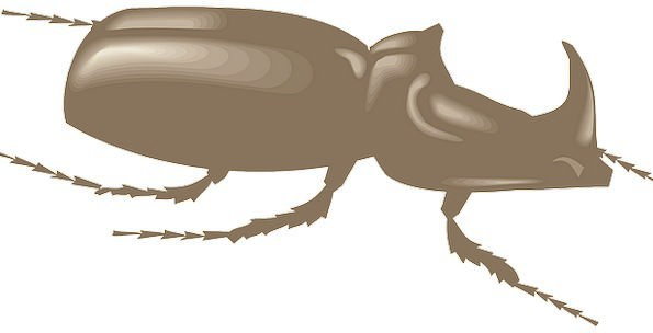 Brown Chocolate Opinion Side Lateral View Insect B