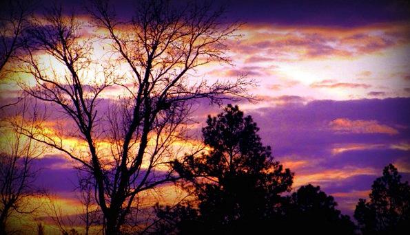 Sunset Sundown Vacation Taillight Travel Trees Pla