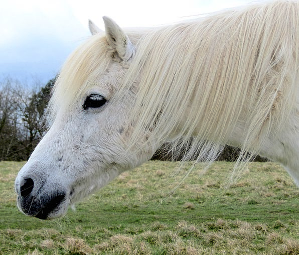 Horse Mount White Snowy Pony Animal Physical Mamma