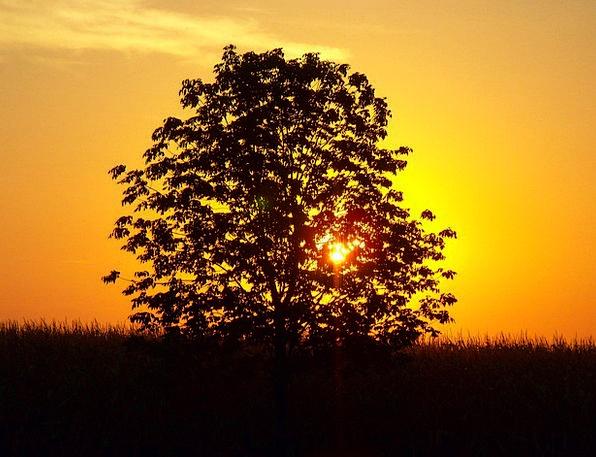 Sunset Sundown Vacation Sapling Travel Landscape S