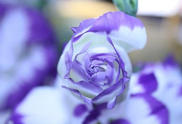 Flower Floret Landscapes Interesting Nature Purple